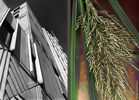 A Black and white architectural photograph of Lansing's Sparrow Hospital juxtaposed to a color botanical photo of blades of grass with it's inflourescence by architectural photographer Kim Kauffman.