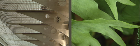 Two photos contemplating architectural forms of both a Lansing Community College building detail and the leaves of a Staghorn Fern by architectural photographer Kim Kauffman.