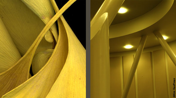 Two photos that reveal the architectural similarities between a botanical photo of Ginko leaves and an architectural detail by arcitecture photographer Kim Kauffman.